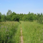 Seaton Trail passing through a field