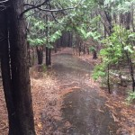Forestream and hydro line trail flooding 2